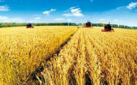 核技术也可服务于农业