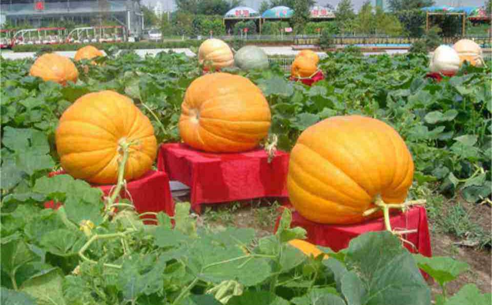 中国成为联合国植物突变育种奖最大赢家
