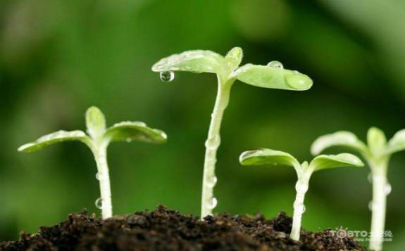 四川省原子能研究院植物诱变育种研究成果荣获国际成就奖