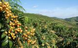 中法企业携手核农业技术合作