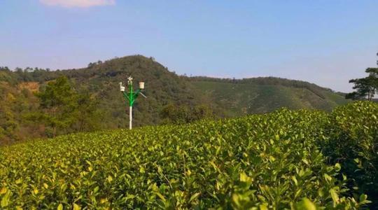 应用同位素溯源技术对茶叶原产地保护可行性研究