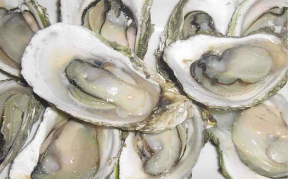 科学家采用电子束处理牡蛎 降低病毒污染风险
