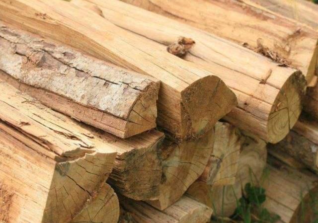 辐照技术在木材改性中的应用