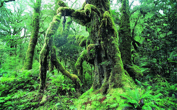 亚马逊树木是人类历史的时间胶囊