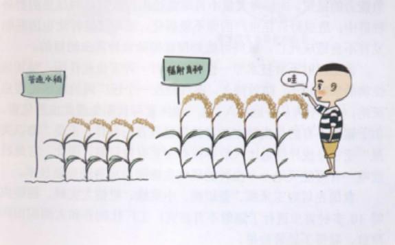 听说过我国辐照育种取得的成果吗?