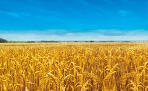 """""""重离子""""的农业情怀"""