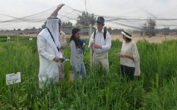 核技术帮助科威特开发新的大麦新品种