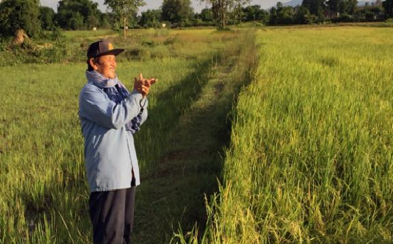 柬埔寨研究人员利用同位素技术帮助农户增加产量和收入