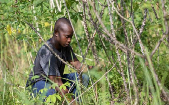 塞拉利昂通过核技术开发更优作物来解决隐性饥饿