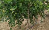 氧同位素技术探寻红枣林土壤水分利用