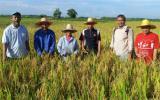 马来西亚原子能机构通过核技术培育高产水稻 造福农民