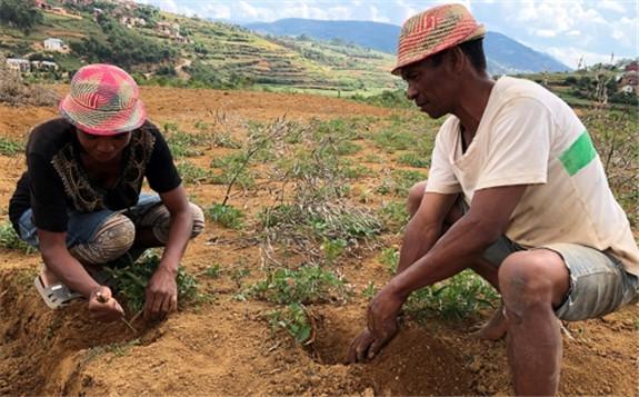 借助核技术控制马达加斯加的土壤侵蚀和退化