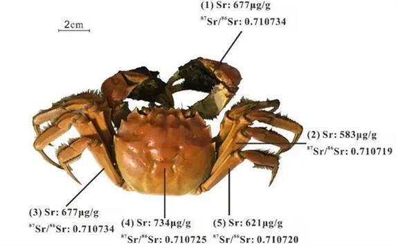 美味的大闸蟹如何鉴别原产地?同位素来帮忙