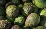 科学家利用激光测振为水果成熟检测带来更好方案
