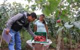核技术为厄瓜多尔的水果打开了新的市场