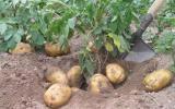 辐射技术可拯救印度农产品