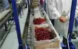 核技术助力阿根廷新鲜水果对外出口