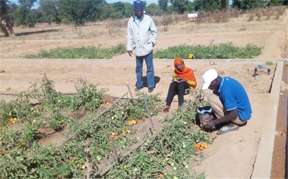 马里共和国利用核技术加强用水管理 提高土壤肥力