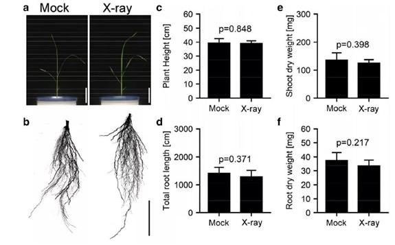 利用X射线CT对水稻根系结构进行高通量三维可视化