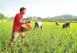 采用碳同位素示踪法给稻田土壤施肥可缓解全球变暖