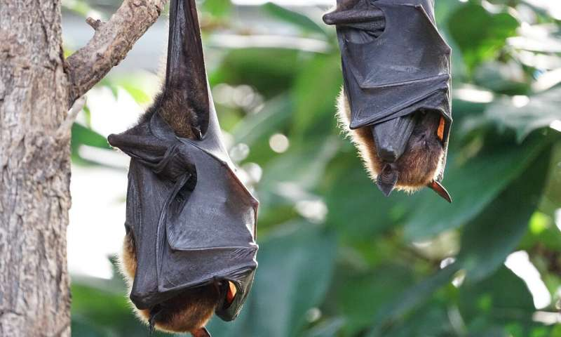 受蝙蝠启发开发检测器以帮助防止油气管道泄漏
