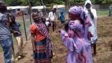 尼日利亚:核技术帮助逃离恐怖主义的人们面对粮食困境