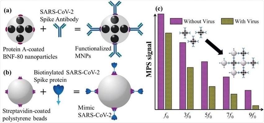 功能化磁性纳米粒子可快速灵敏地检测SARS-CoV-2