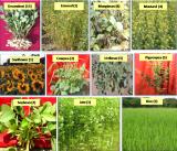 巴巴原子研究中心开发出几种与作物生产和作物保护相关的农业技术