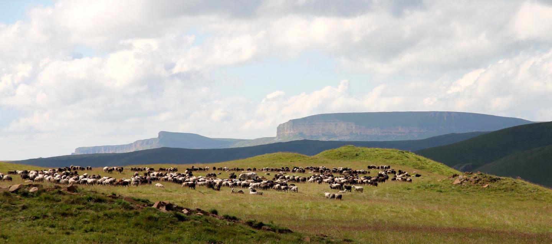 同位素分析:青铜时代牧民们的饮食以奶类和肉制品为主