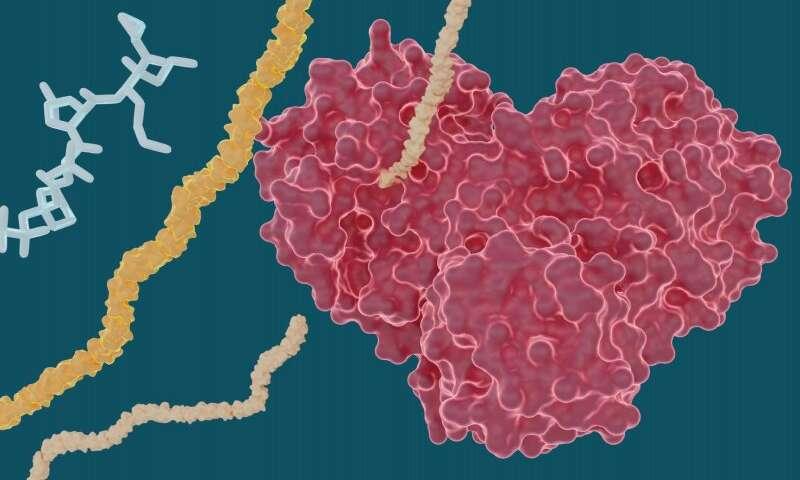 X射线研究探索了丙型肝炎药物治疗COVID-19的潜力