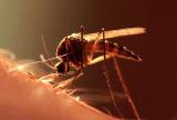 如何利用辐照技术消灭蚊子?