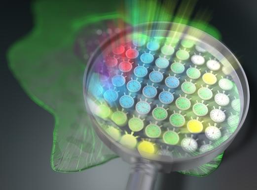 科学家开发不需要机械扫描就能获得荧光寿命图像的新方法