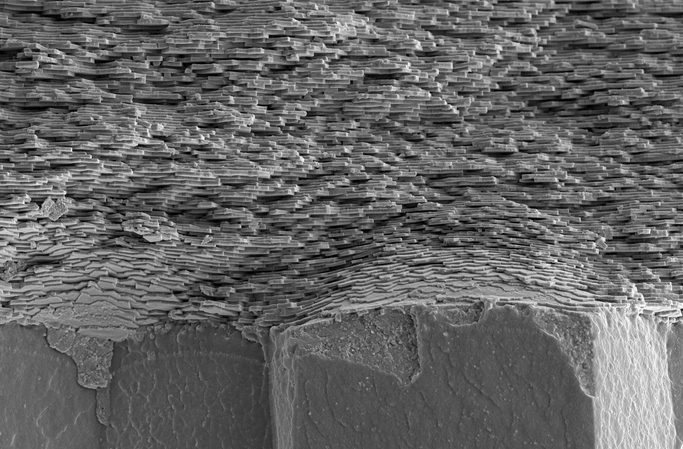 利用X射线纳米断层扫描发现珍珠母的周期性结构