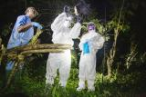 借助核衍生技术在塞拉利昂搜寻蝙蝠携带的病毒