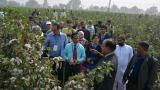 巴基斯坦利用核技术提高棉花耐受性 应对气候变化对产量的影响