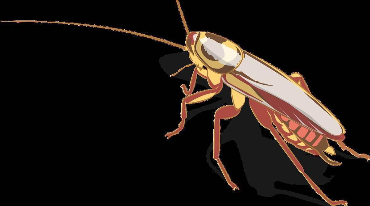 大量研究证明,蟑螂具有出色的抗辐射能力!