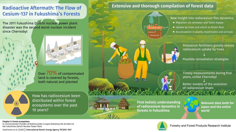 福岛核灾难后森林中放射性铯的动态:喜忧参半