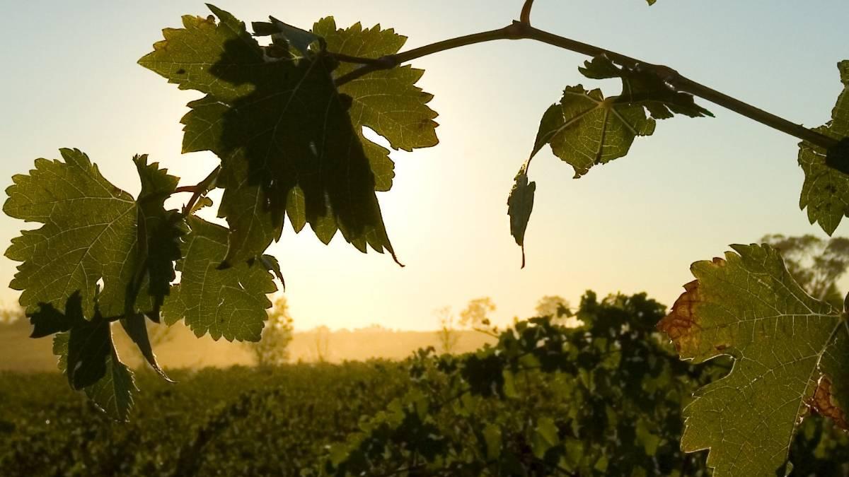 澳大利亚利用辐照技术使水果生产商可以更快地进入越南
