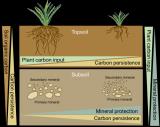 中科院植物所土壤碳稳定机制研究取得进展