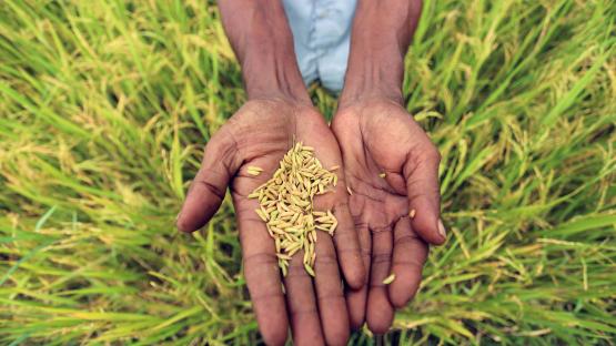 IAEA表彰植物突变育种和相关生物技术方面的卓越成就