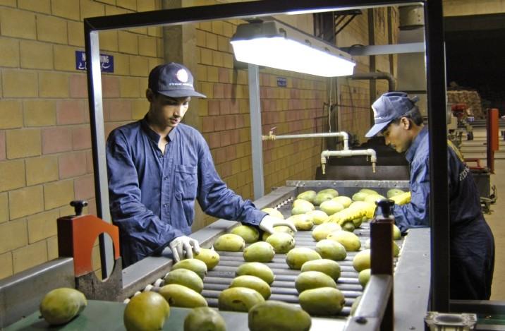 巴基斯坦因缺乏辐照设施未能增加对美国的芒果出口