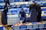 德国专家称:核废水污染物将通过海洋食物链到达消费者餐盘