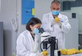 中国参与研制的《橘小实蝇辐照处理》国际标准正式实施