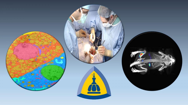 """新型""""放射性糖""""结合成像技术帮助快速追踪细菌感染"""