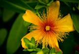 中药材贯叶金丝桃的电子束辐照杀菌研究
