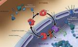 研究人员开发放射性标记物以检测微小的侵袭性癌瘤