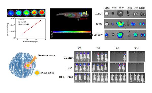 硼中子俘获治疗的纳米药物取得新进展