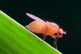 《核技术利用》——辐射技术防治害虫有一手